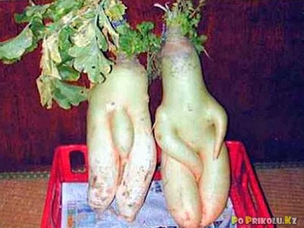 eroticheskie-ovoshi-i-frukti